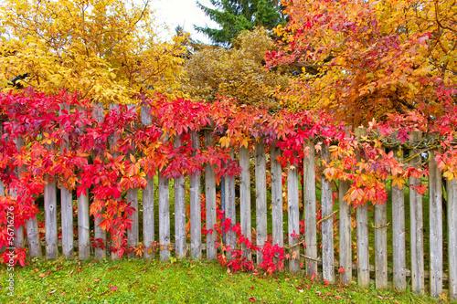 Fotobehang Tuin Garten im Herbst