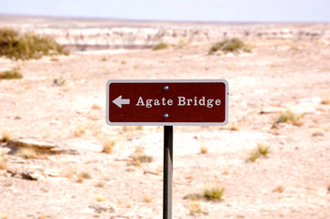 Petrified Forest - Agate Bridge-1-6