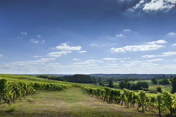 Vignoble, Bordeaux, vignes, Saint-Emilion, panorama