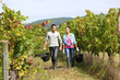Couple of winegrowers walking in vineyard