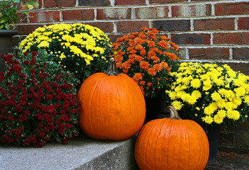 Pumpkins and Chrysanthemums