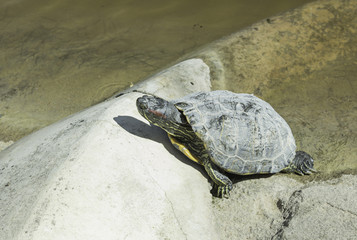 Turtle on shore