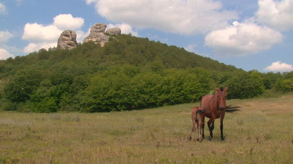 horse and foal on a background of mountains