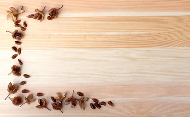 Beech nuts and empty nut shells, half border on wood