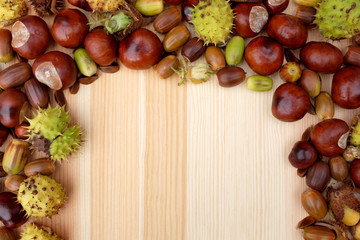 Border of natural fall material - acorns, horse chestnuts, beech