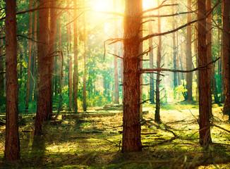 Forest © Subbotina Anna