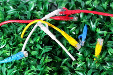 UTP lan cable on green grass