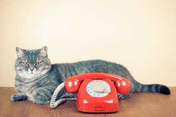 Retro rotary telephone and big cat on table