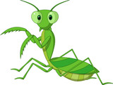 Cute praying mantis cartoon