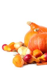 Autumn setting with hokkaido pumpkins