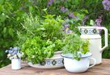 Kräuter auf dem Gartentisch