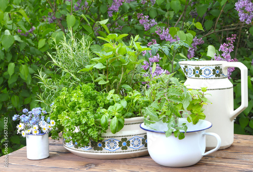 Aluminium Lilac Kräuter auf dem Gartentisch