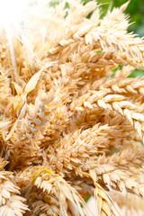 Ähren, Getreide