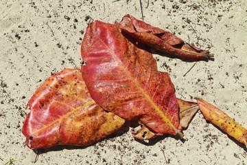 Autumn leaves on the beach