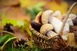 Leinwanddruck Bild - Pilze