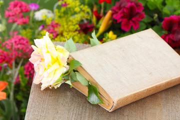 Buch mit Rose und Textfreiraum
