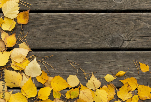Autumn  birch leaves and pine needles on a wooden background