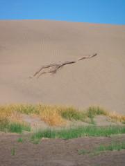 Die Dünen von Maspalomas auf Gran Canaria