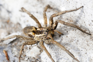 closeup of a Spider