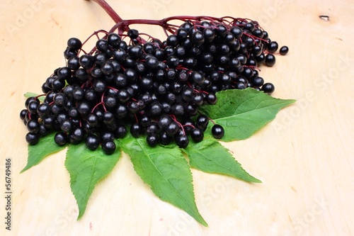 Therapeutic elderberry fruits