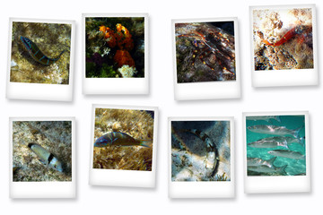 Polaroid of fish