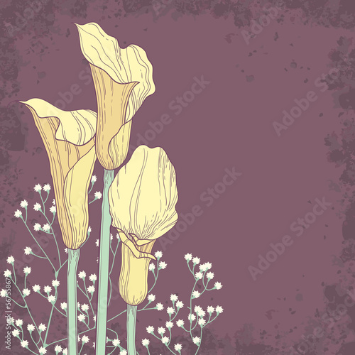 Bunch of calla flowers. Elegant floral background