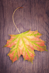 Autumn colorful leaf on wooden background