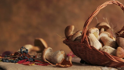Still life with basket of mushrooms - HD stock footage clip