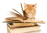 Cute little red kitten and books isolated on white