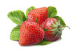Many strawberry is placed on a white background.