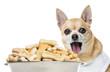 Close up of a Chihuahua panting behind of a full dog bowl