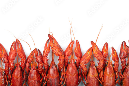 Many red crayfish
