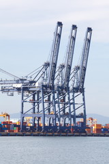 Industrial Cargo Cranes in Industrial Port