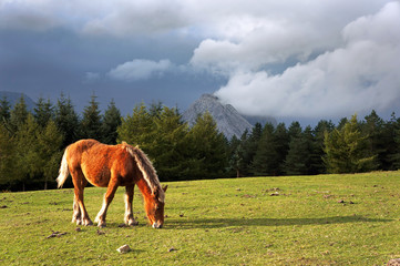 horse on mountain with stormy clouds