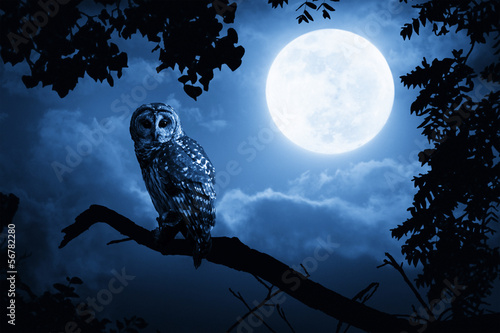 Owl Illuminated By Full Moon On Halloween Night