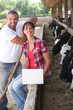 Farming couple with herd of cattle and laptop computer
