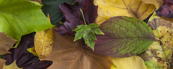 Autumn leaves website header