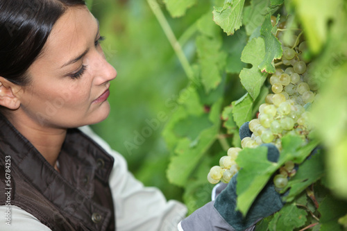 Woman looking bunch of grapes