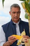 Farmer looking at a cob of sweetcorn