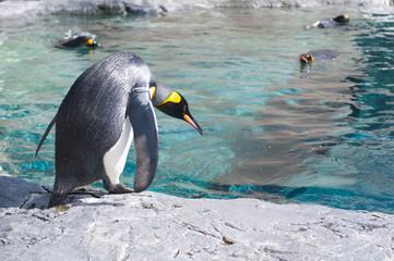 ためらうペンギン