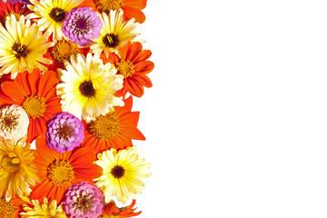 Flower Border, White Background
