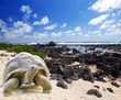 Large turtle (Megalochelys gigantea) at sea edge