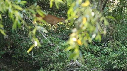 Deer sighting in the forest.