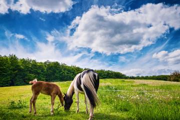 Pferdetraum