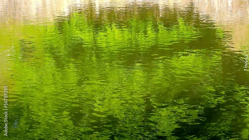 Reflection of green branches in flowing water