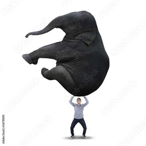 Man lifting big elephant - isolated