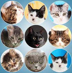 Collage from several cats on blue background