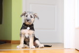 Animals at home dog pet mutt puppy sitting on floor poster