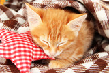 Cute little red kitten sleeps in plaid close up