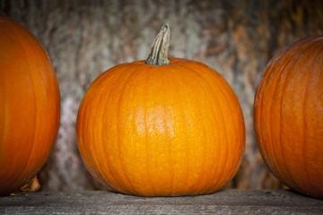 Kürbis | Halloween | Herbst